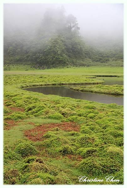 有好多奇妙的水草植物2