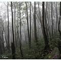 迷霧森林之二