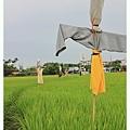 0531 今年夏天田裡四處都是稻草人