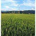0620一望無際的稻田