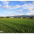 0620 大塊稻田