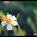 0622練習手動對焦近拍小花