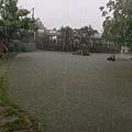 請看大雨如此滂沱