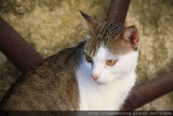 0727優雅的紙店 門口的貓貓