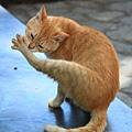 0729 公園裡的貓貓 在吃手