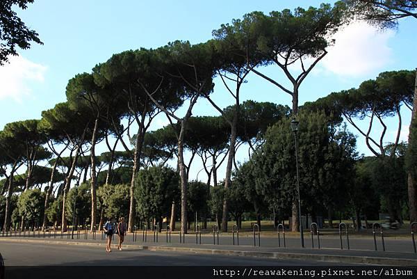 0731 路邊的樹長得好高