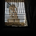 0802 這樣的鐵窗 不難想像這裡有一段時間是囚禁犯人之用