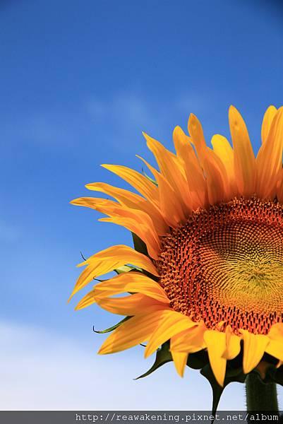 0807 好像花朵抬頭看著天空