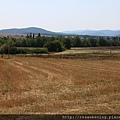 0807 乾枯的牧草