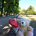 0811 小熊遊世界之盧卡林蔭大道