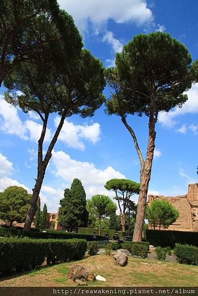 0731 外面的公園 有好高的大樹