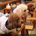 三隻小狗排排站