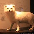120227 逼真的極地動物標本
