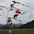 草地上 風箏隨風起舞