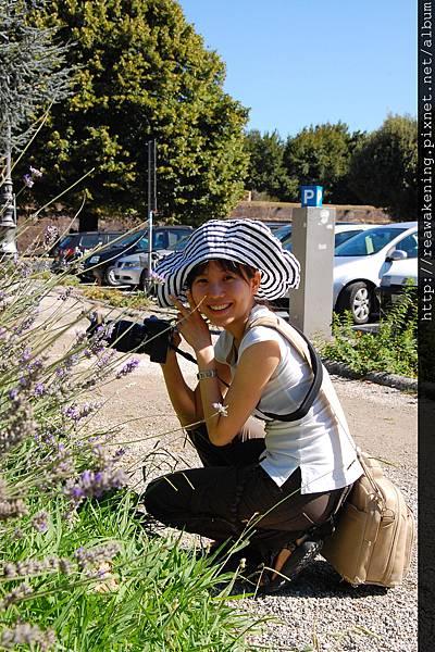 0811 盧卡車站前的薰衣草花叢