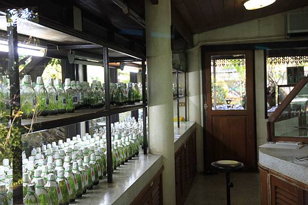 栽培蘭花的溫室