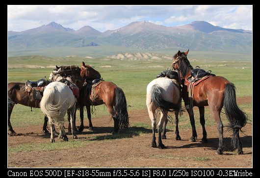 大家都是騎馬前來  因中途太多爛泥無法步行