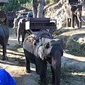 大象身上有綁椅子