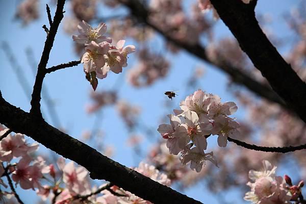 0228 剛好拍到小蜜蜂