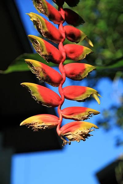 奇怪的植物 很漂亮但不知道名字