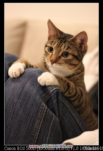 趴在主人的膝蓋上好舒服
