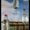 1215 很有創意的水草瓶子