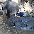 象師在努力洗大象