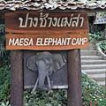 大象學校門口