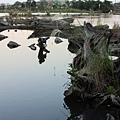 1229羅東林場. 貯木池2
