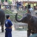 大象拿了象師的帽子