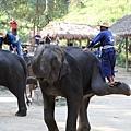 象師在大象身上滾來滾去