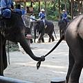大象用鼻子和尾巴手牽手