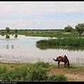 馬兒在河邊吃草