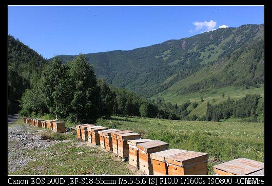 一片美麗山坡中的蜂巢