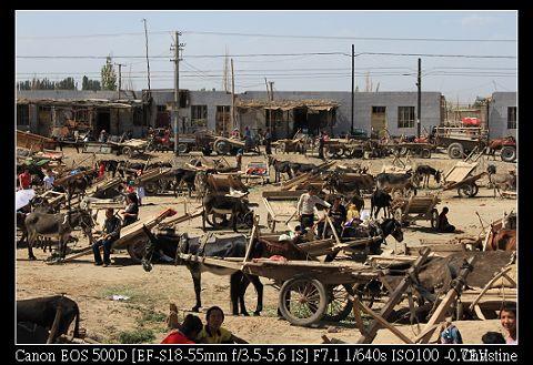 市集裡超級多的驢車