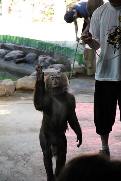 Hi 叫我猴子大王吧
