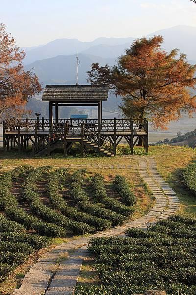 1229玉蘭茶園 7