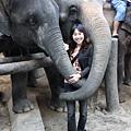 花二十元就可以和大象合照