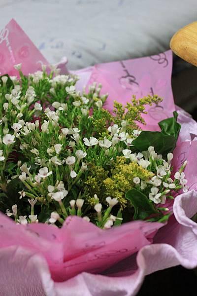 0225不知名的白色小花