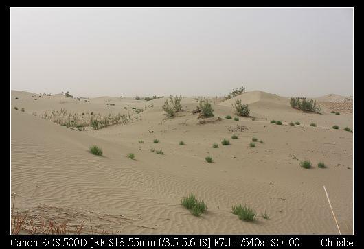 跨越路旁的芒草群  就是一片沙漠