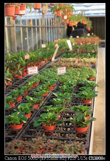1215 金車蘭花園  賣好多便宜的盆栽