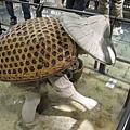 99.11.03 頭城--蘭陽博物館 (48).JPG