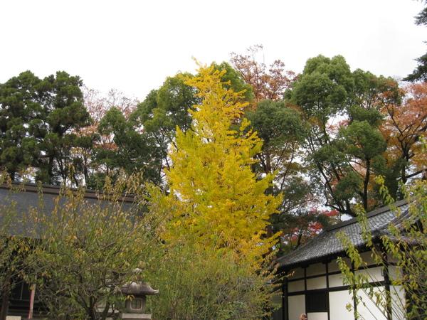 2008.11.25 京都--北野天滿宮 (16).JPG