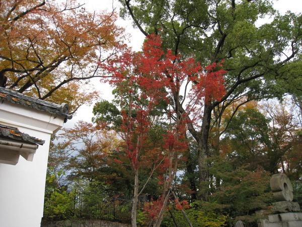2008.11.25 京都--北野天滿宮 (28).JPG