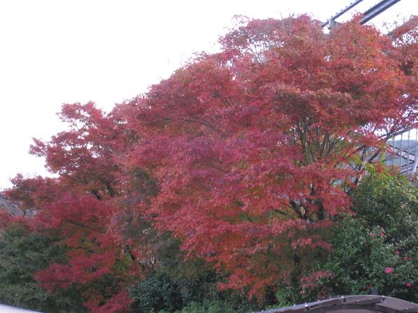 2008.11.25 京都--嵐山 (26).JPG