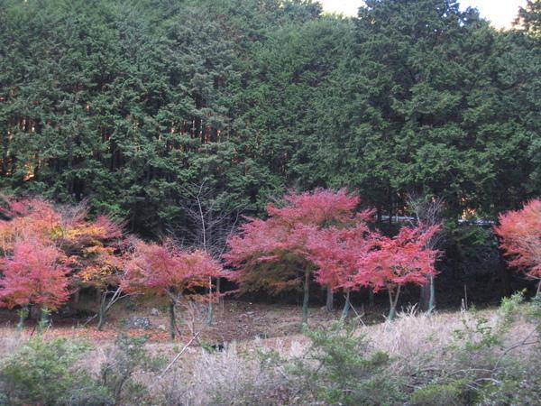 2008.11.25 京都--嵐山 (211).JPG