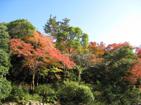 2008.11.25 京都--嵐山 (241).JPG