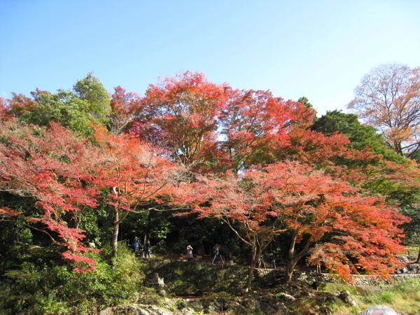 2008.11.25 京都--嵐山 (244).JPG