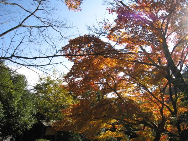 2008.11.25 京都--嵐山 (259).JPG