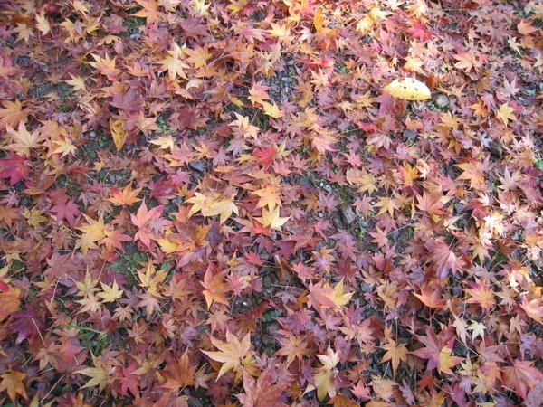 2008.11.25 京都--嵐山 (267).JPG